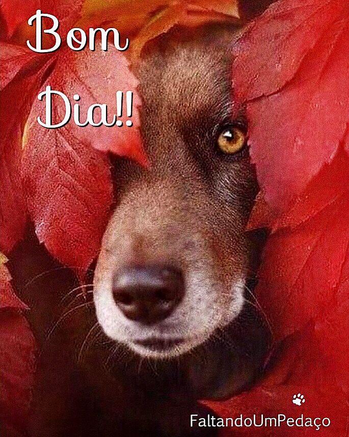 Bomdia Frases Pet Cachorro Dog Reflexão Pensamento Bom Dia