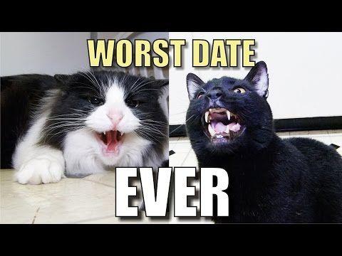 Internet Dating jag älskar katter