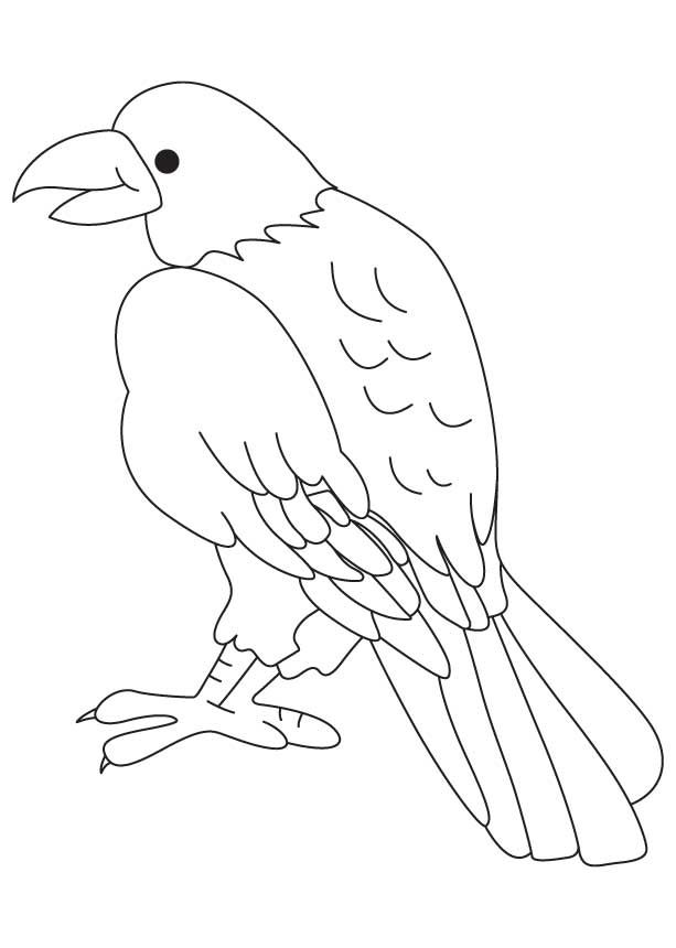 Birds Of Prey Colouring Pages Bird Coloring Pages Colouring Pages Coloring Pages