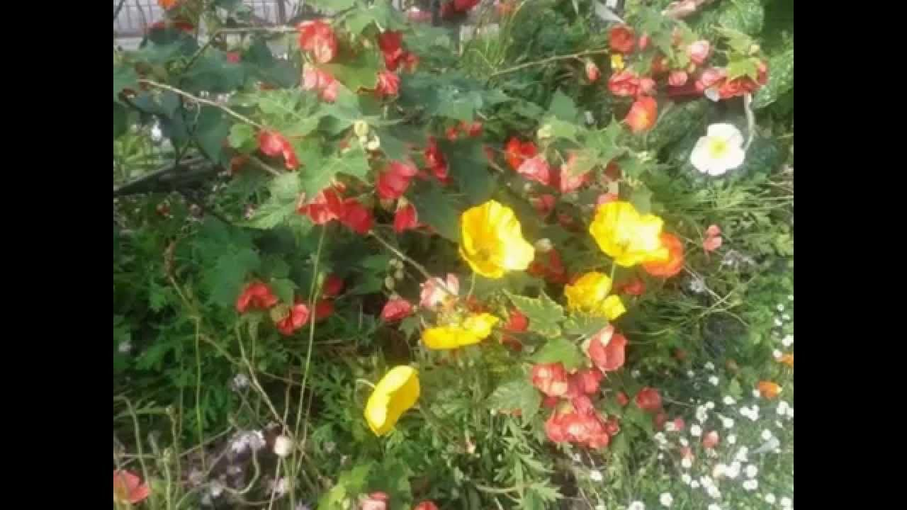 11- ballades - fleurs de ville au mois de mai - jardins - kitty ...
