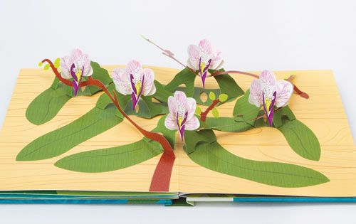Orchid Spread From Paper Blossoms Butterflies And Birds
