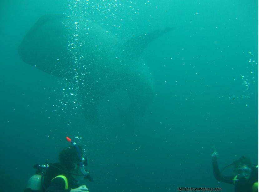 Explore Dream Dive Seil