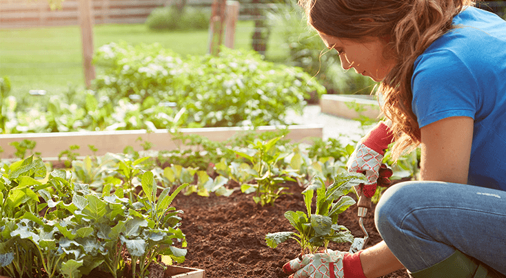How Much Soil Does Your Raised Bed Garden Need? in 2020