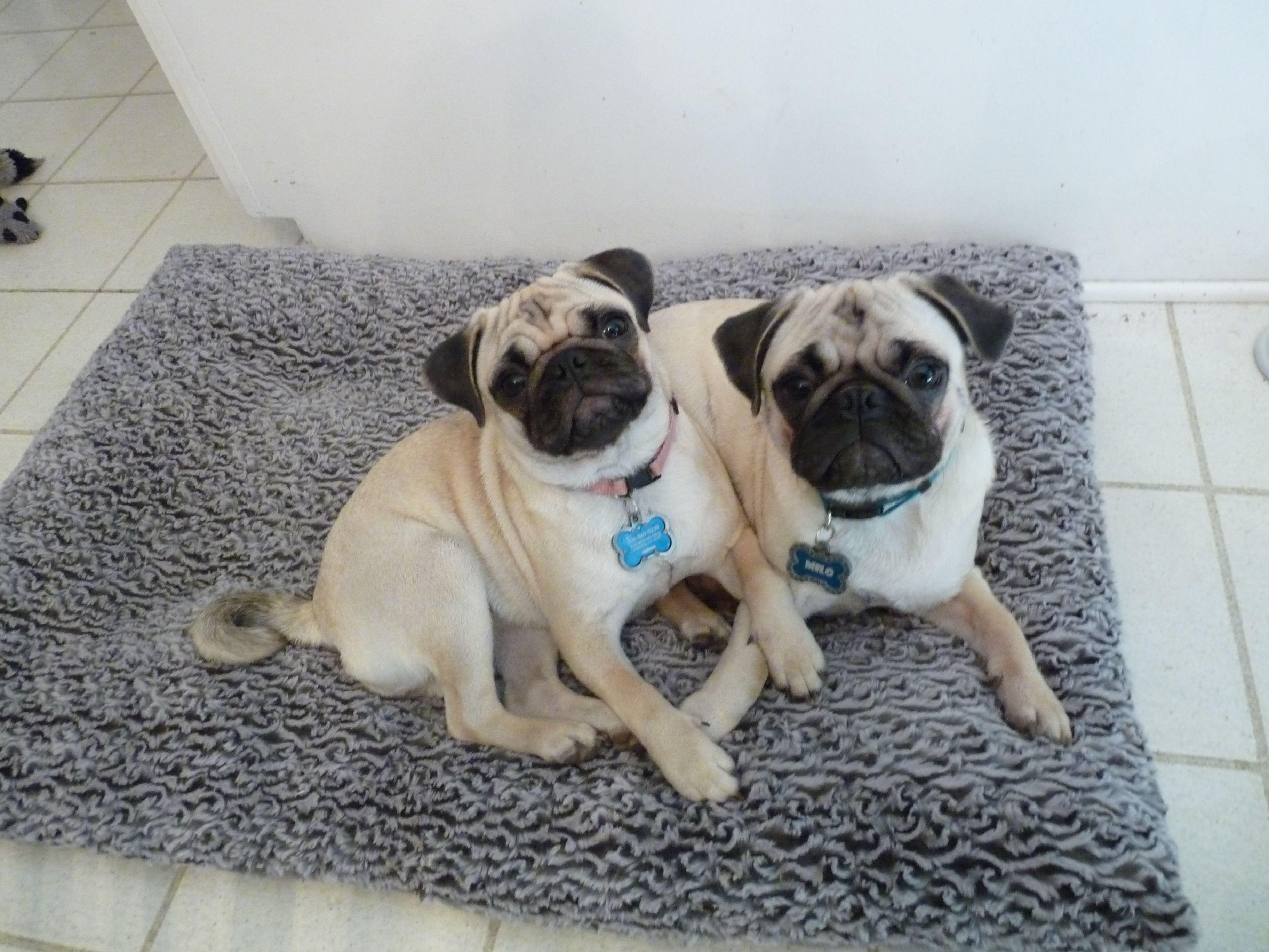 Ellie & Milo Pugs...Me & my brother!  Nov 2011
