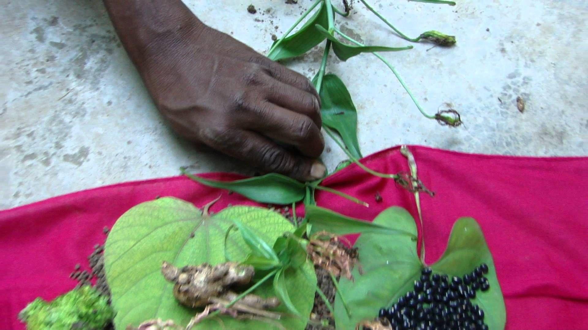 Pankaj Oudhia's Healing Herbs: Diabetes mellitus Type 2 with Gout. HF-739