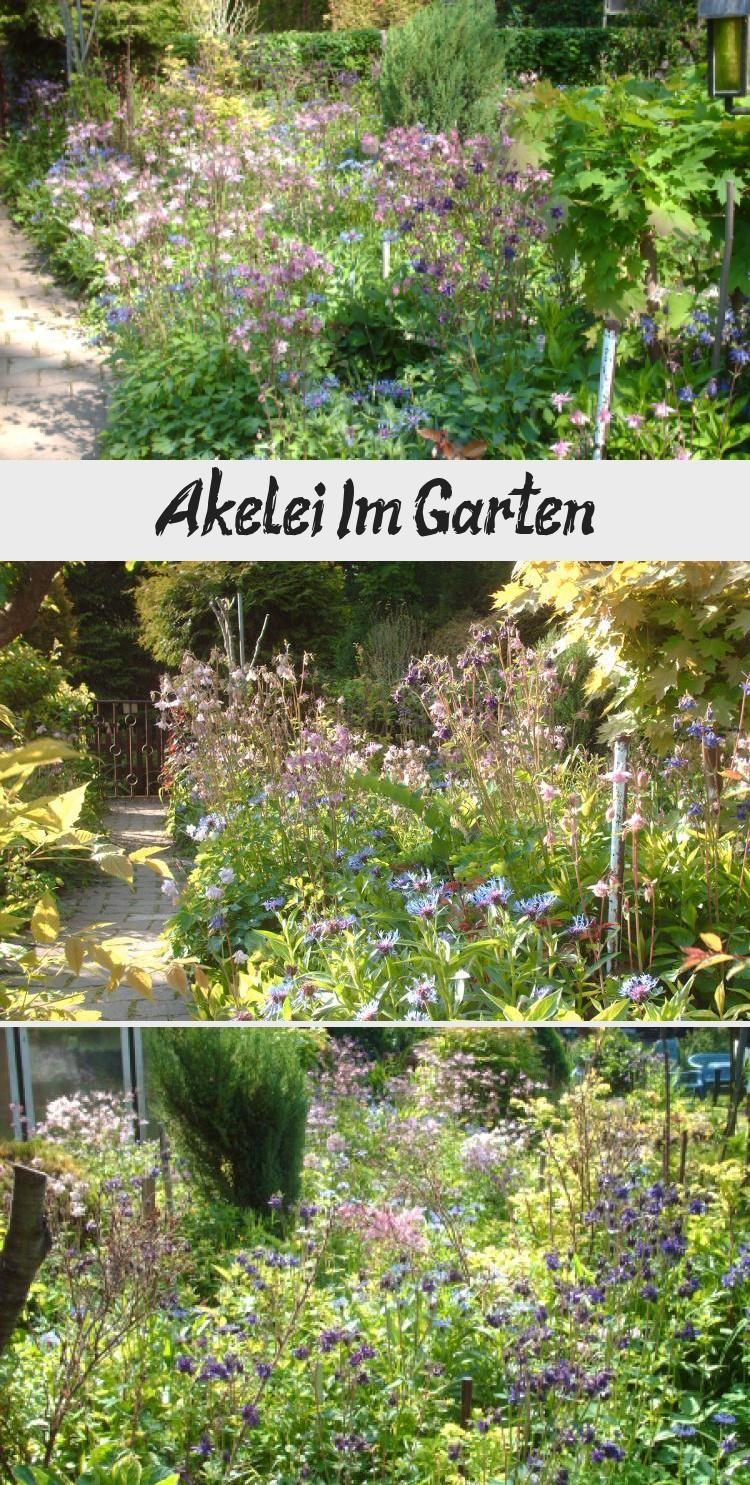 Akelei Im Akelei Garten Garten Ideen