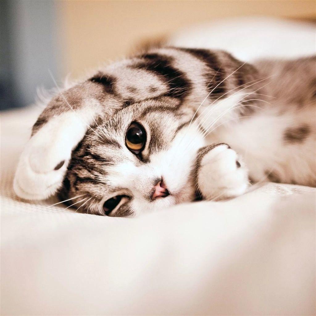 Cute Lovely Lied Kitten Animal Retina Ipad Air Wallpaper Cute Cat Wallpaper Cute Cats And Kittens Kittens Cutest