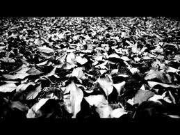 oscuridad hojas secas - Buscar con Google