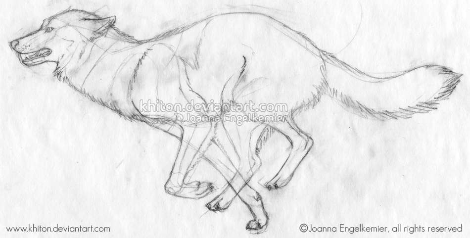 A Sketch Of A Wolf Running That I Did During My Internship At The