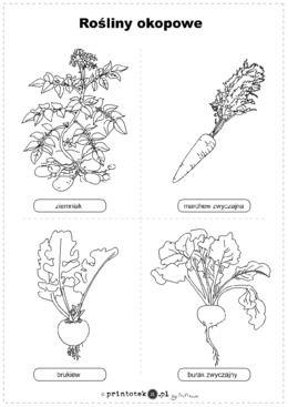 Rosliny Okopowe Ilustracja Czarno Biala Printoteka Pl Fabric Journals Education School Notes