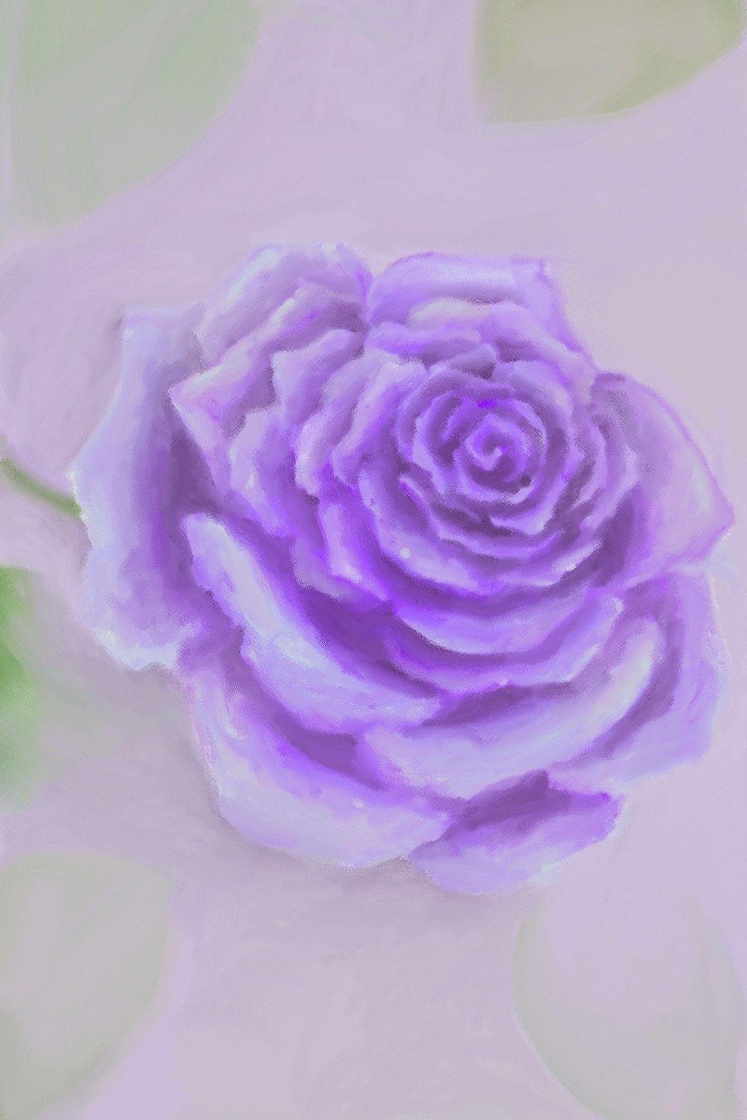 وردة الجوري موف Purple Wallpaper Iphone Nature Wallpaper Purple Wallpaper