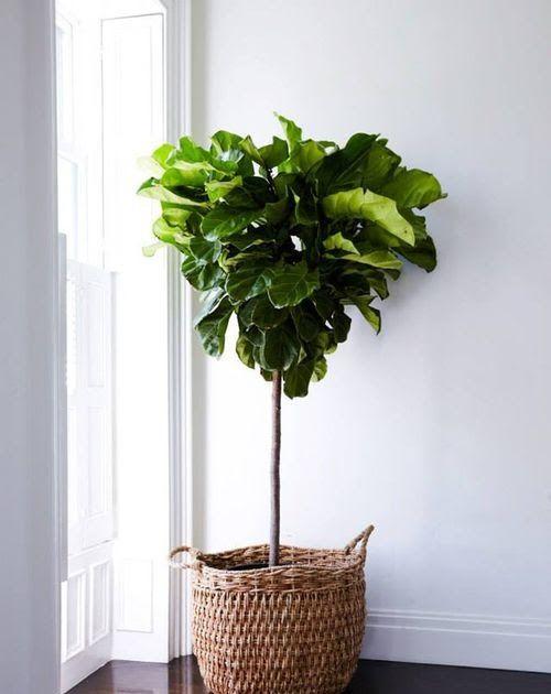 8 idées pour un arbre dans la maison | Nyc apartment ...