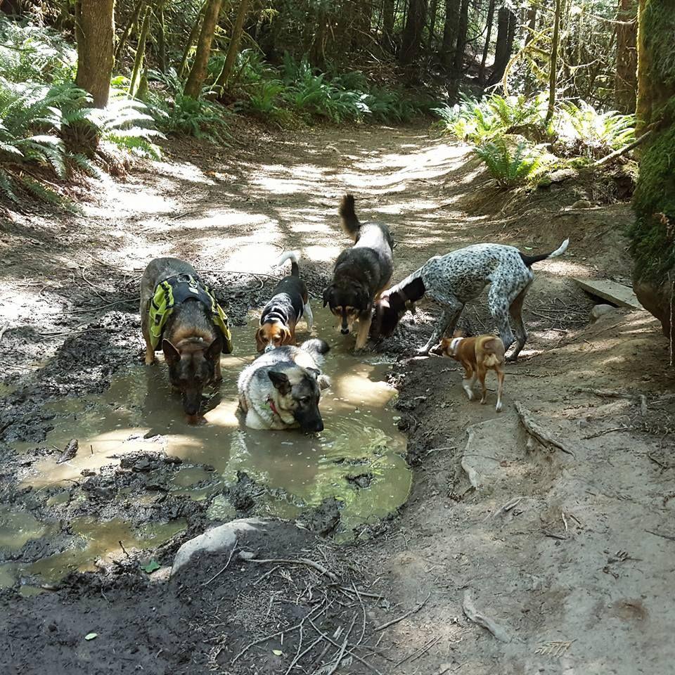 Park Art|My WordPress Blog_Woof River Animal Rescue Schaumburg