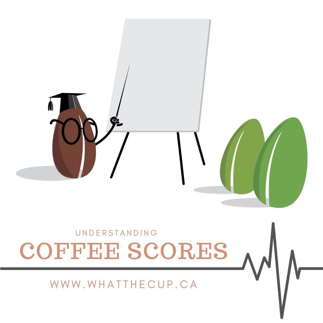 Understanding Coffee Scores Coffee Understanding Cupping Points