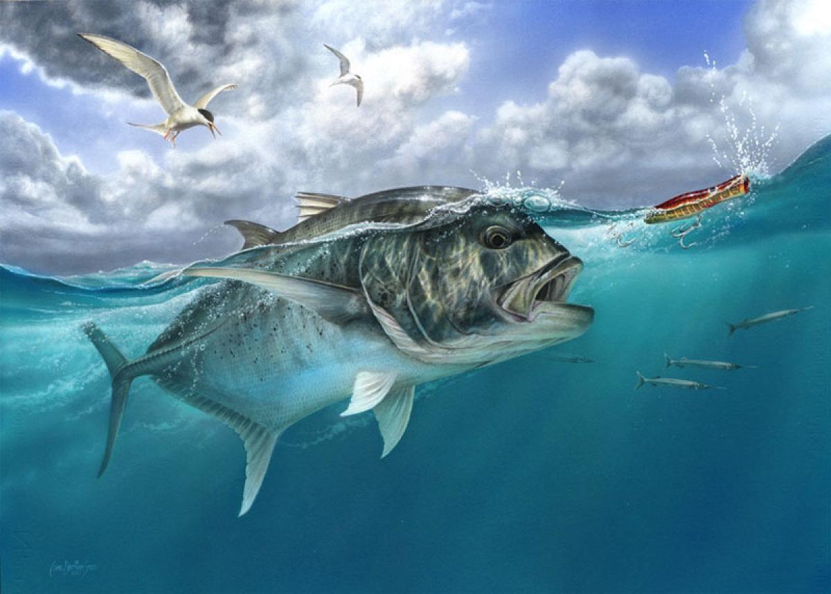 Kingfish Chasing A Popper Fish Fish Painting Fish Art