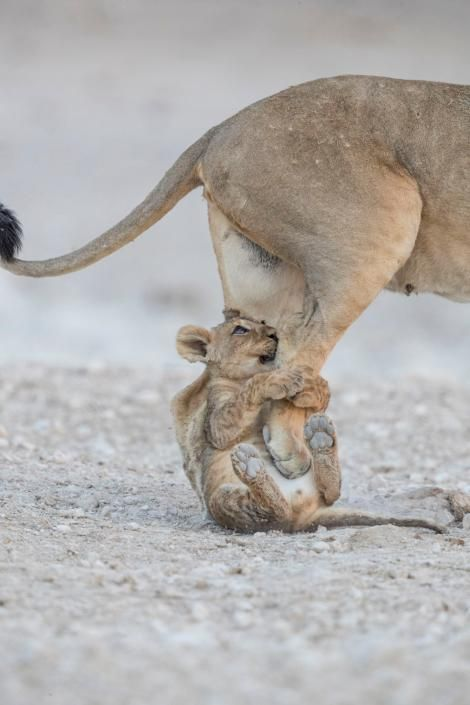 30 Stunning Wildlife Pictures From Across The Globe Cute Baby