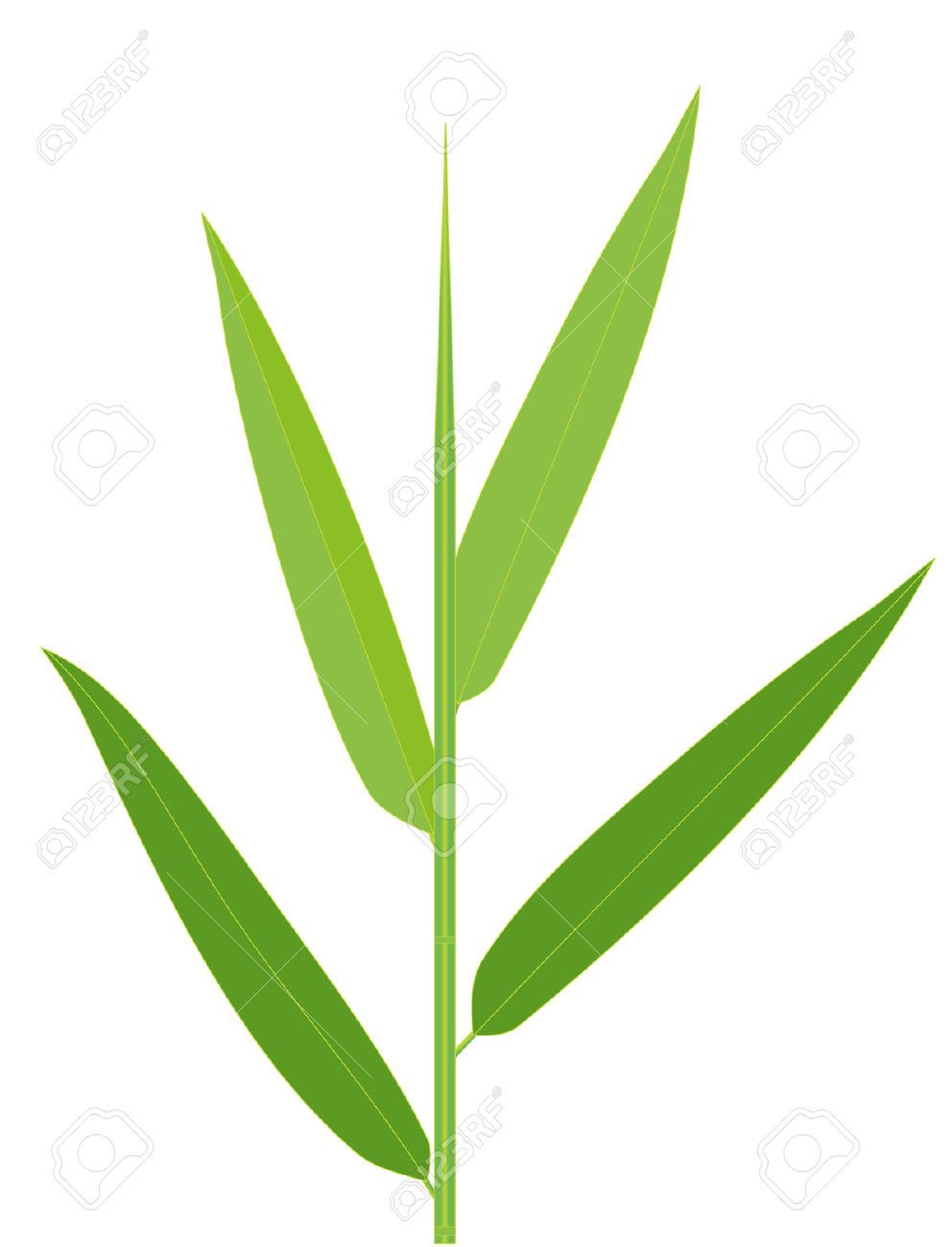 Stock Vector With Images Bamboo Leaves Leaf Clipart Plant Vector
