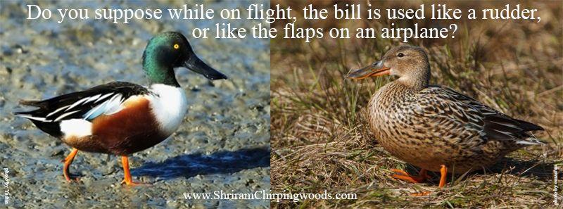 Pin by Shriram Properties Bangalore on Birds of Bangalore