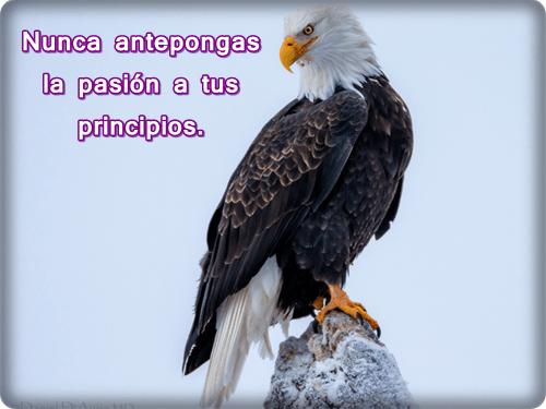 Imagenes De Aguila Con Frases Para Reflexionar Muy Chidas