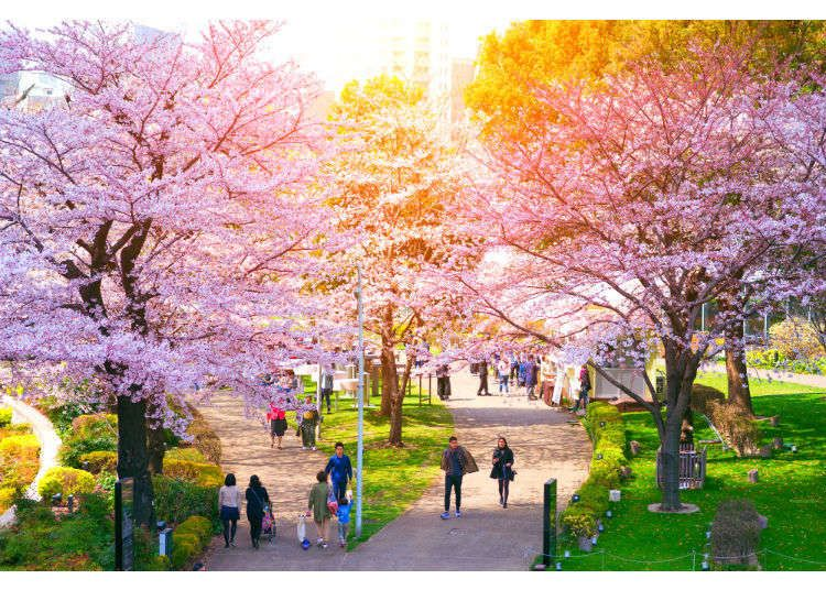Cherry Blossoms In Tokyo 10 Best Places For Sakura In 2021 Live Japan Travel Guide Cherry Blossom Japanese Travel Hanami