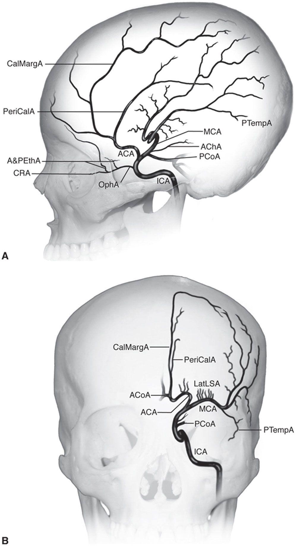 Pin de ROBERT SKONE en Anatomía fisiología Humana | Pinterest ...