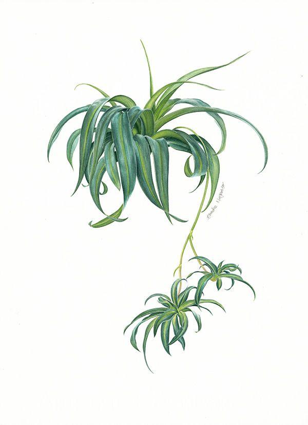 A set of watercolour-botanical illustrations for Süddeutsche Zeitung Magazin, German.