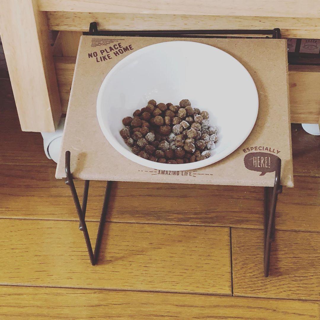 やっと見つけた 3coinsのテーブル付フードボウル 前のseriaも良かったけどこっちの方がボウルが固定されて食べやすいかも 500円には思えないクオリティ チワワ チワワ部 3coins フードボウル フードボウルスタンド フードテーブル インテ Dog Bowls