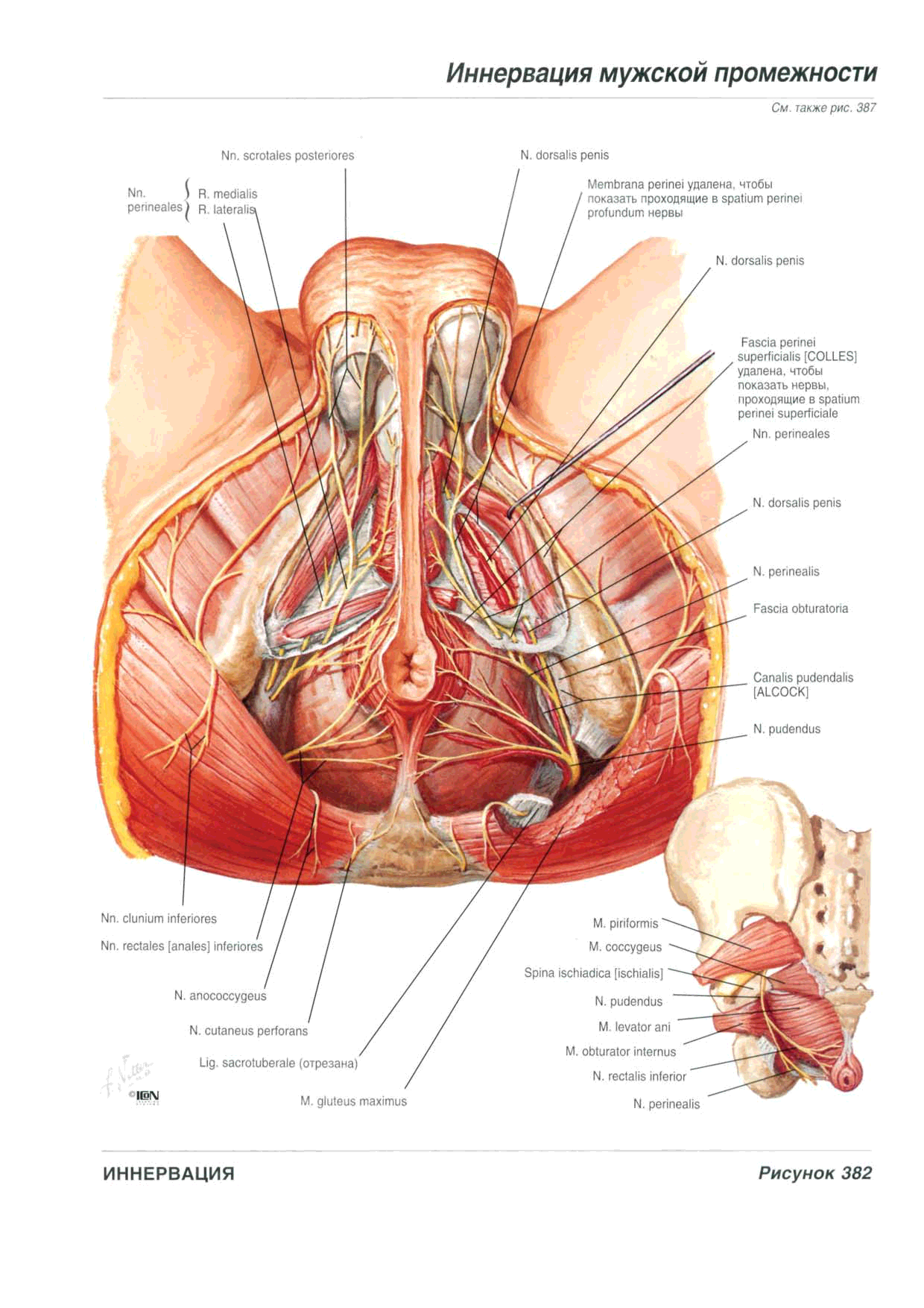 External view of woman reproductive organ in detail - www ...