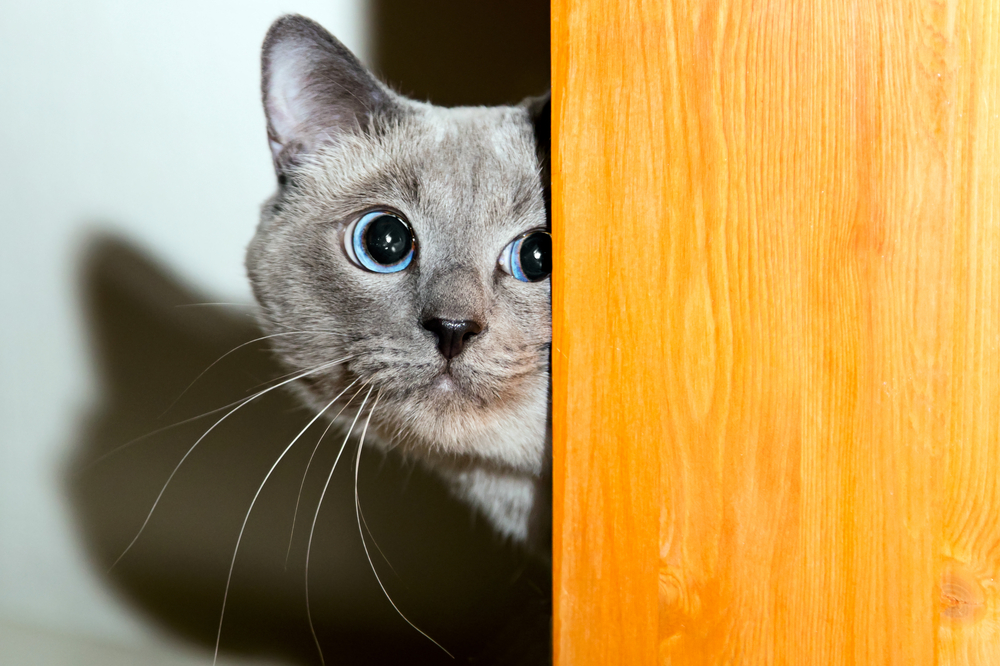 Cat or Dog Scared of the Vet? How to Create a FearFree