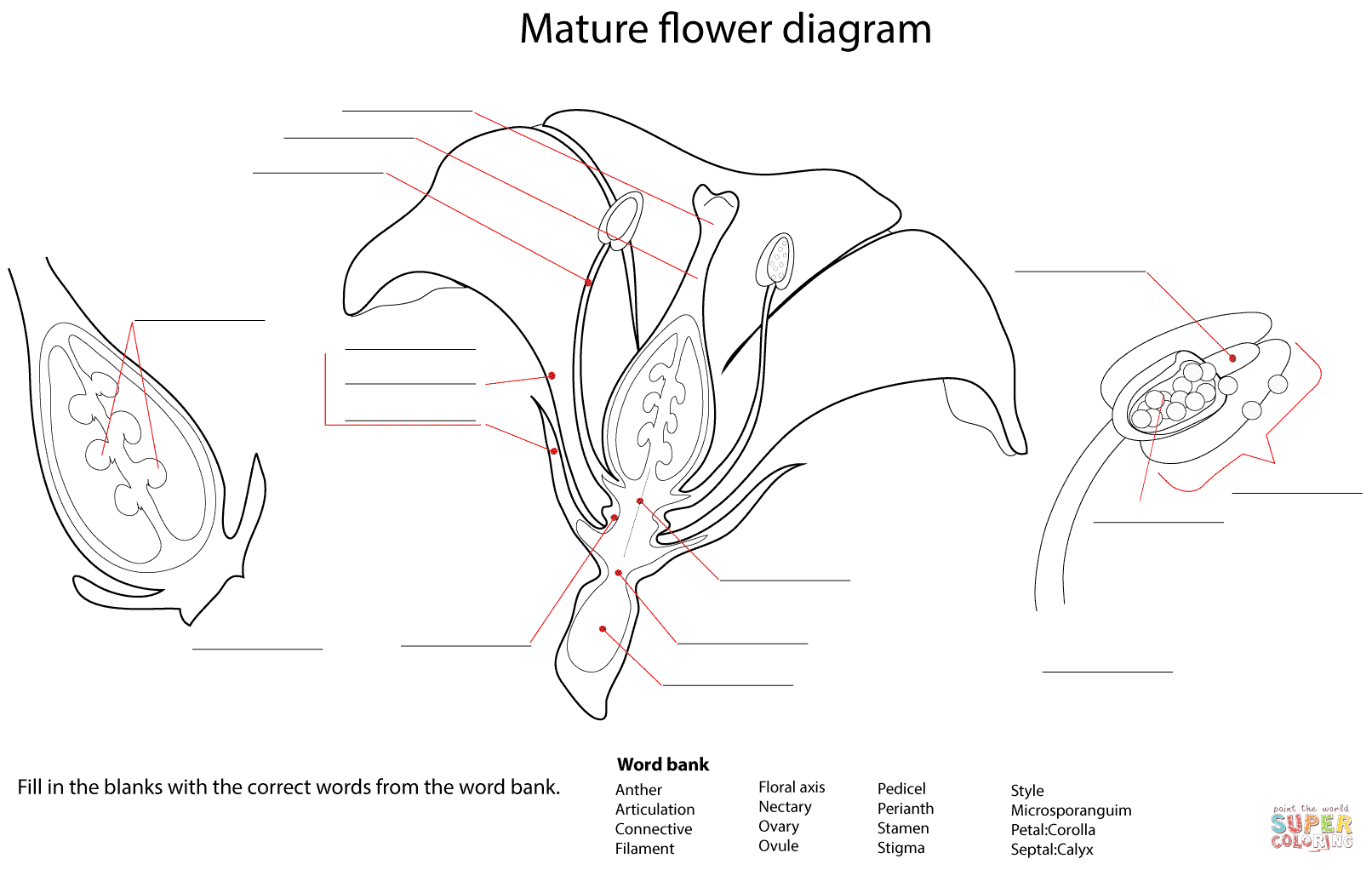 flower diagram worksheet coloring page free printable coloring pages [ 1612 x 1022 Pixel ]