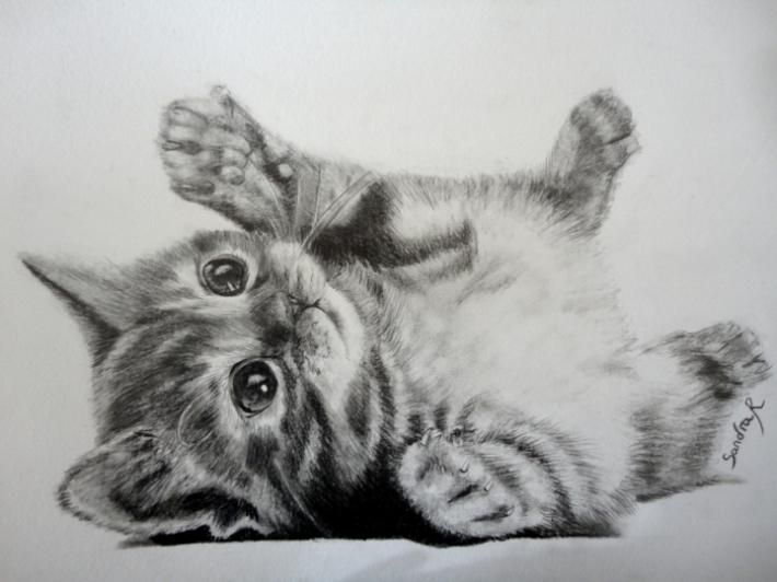 Chaton realistic animal pencil drawings pinterest - Chaton a dessiner ...