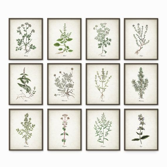 Kitchen Herbs Wall Art Print Set Of 12   Vintage Botanical Herb Prints    Herb Kitchen