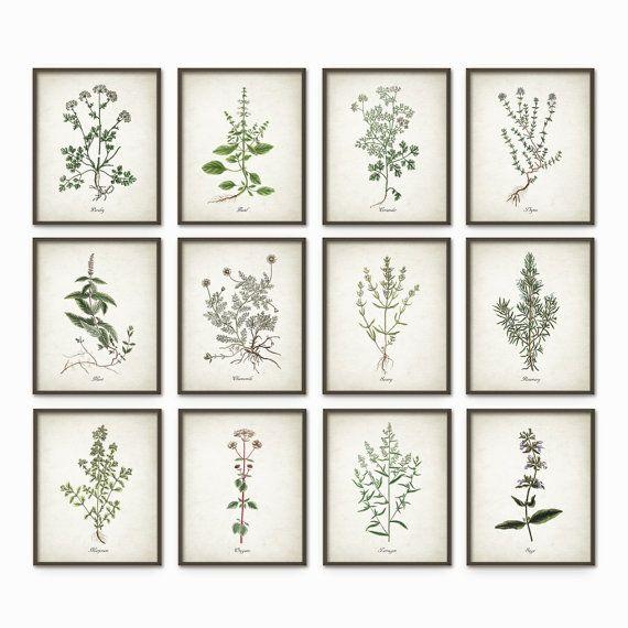 Kitchen Herbs Wall Art Print Set Of  Vintage Botanical Herb Prints Herb Kitchen Decor Illustrations Picture Set Of Twelve Ab