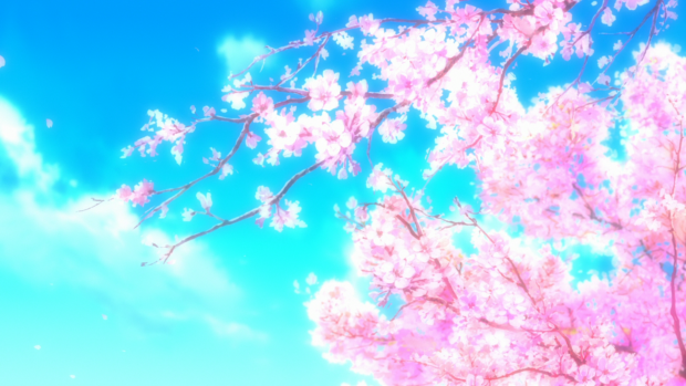 Anime Cherry Blossom Desktop Wallpaper Hoa Anh đao Hinh Nền Kỹ Thuật Mau Nước
