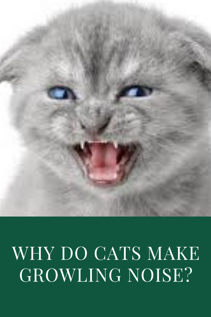 What Do Different Cat Sounds Mean Cats Cat Meowing At Night Cat Yowling