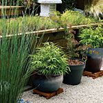 View All Photos | 53 cool container gardens | Sunset