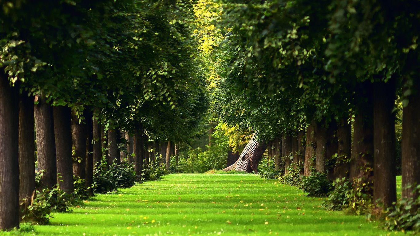 The Natural Summer Forest Green Grass Path 1366x768