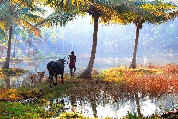 Morning in Bangladeshi Village