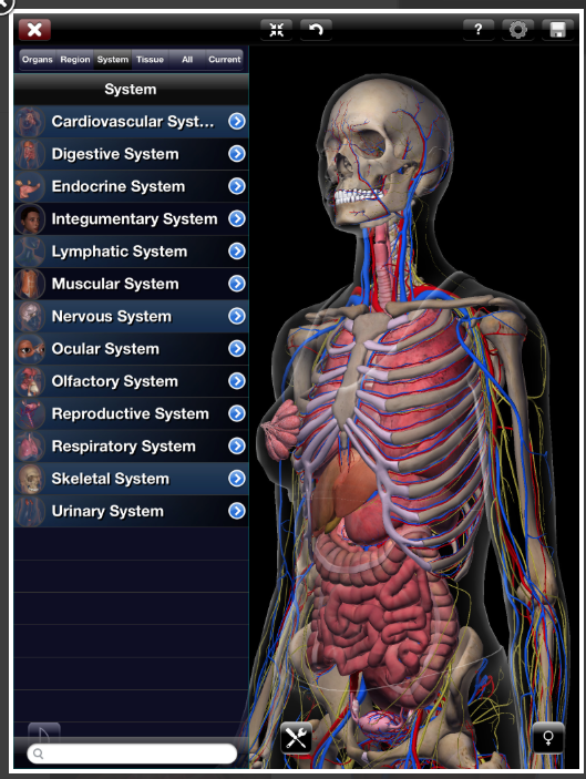 Zygote Is A 3d Anatomy Atlas And Dissection Lab There Are
