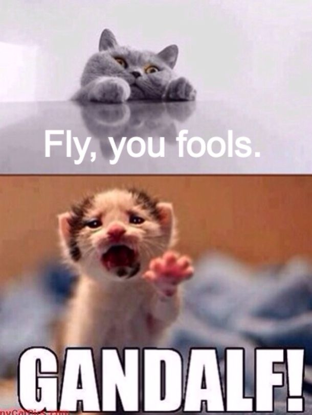 Fly You Fools Funny Animals Funny Memes Funny Animal Pictures