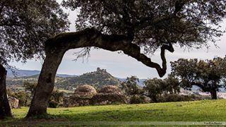 """Y eso a lo que llaman """"dehesa"""" no es más que dos árboles mal puestos.   30 razones por las que nadie debería ir jamás a Extremadura"""