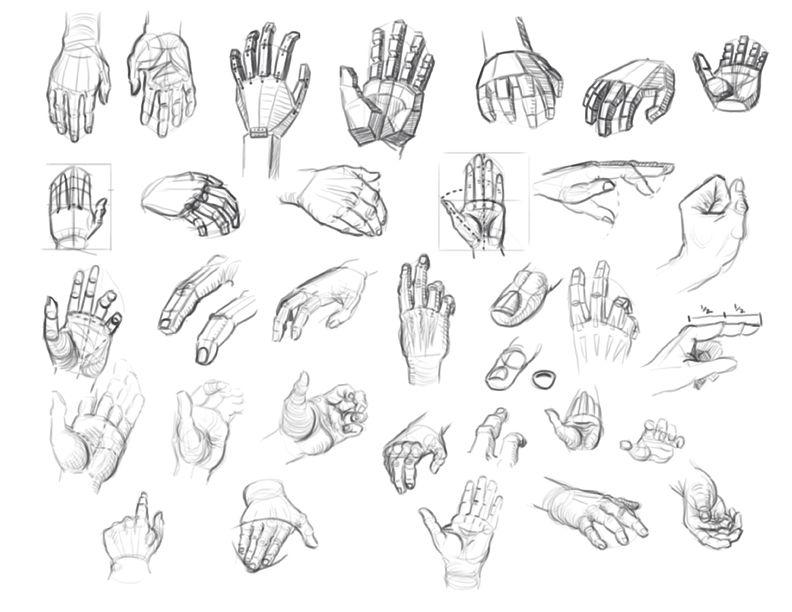 andrew loomis anatomy - Pesquisa Google | ANATOMIA | Pinterest ...
