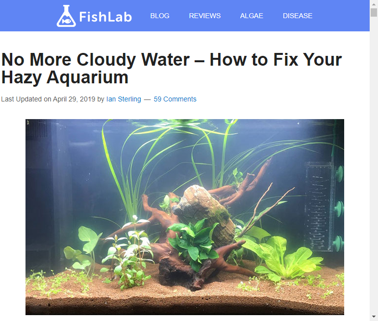 How To Get Rid Of Milky Water In Fish Tank