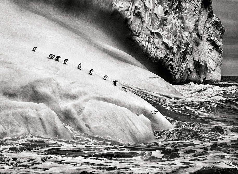 Penguins on icebergs between Zavodovski and Visokoi islands, near Antarctica, 2009 / Sebastião Salgado