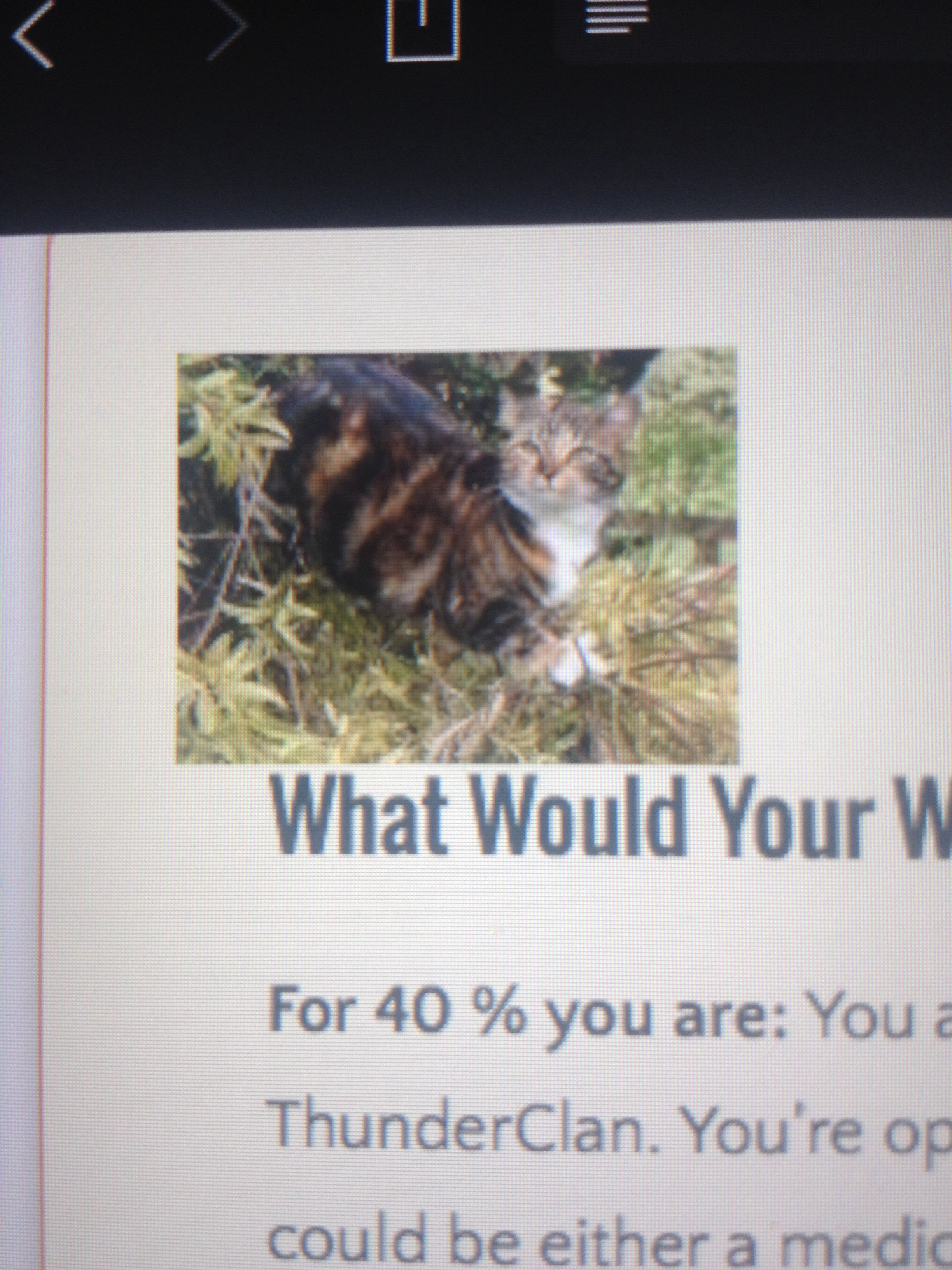Pin by Tobias Prior on warrior cats quizzes Warrior