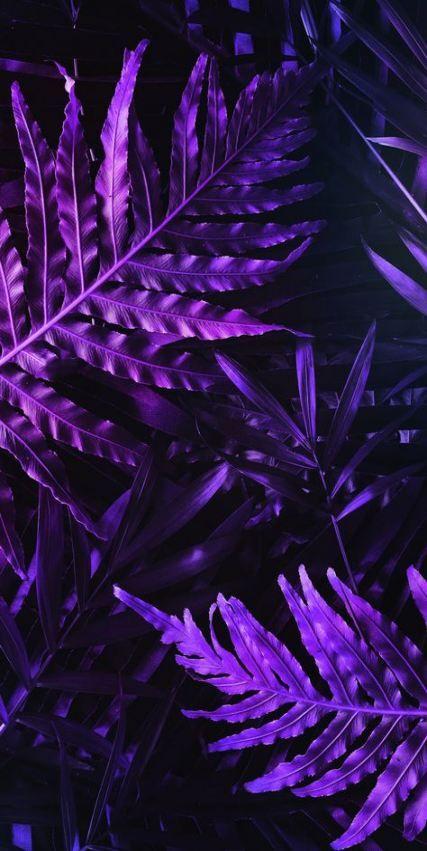43 Ideas Flowers Purple Wallpaper Inspiration For 2019