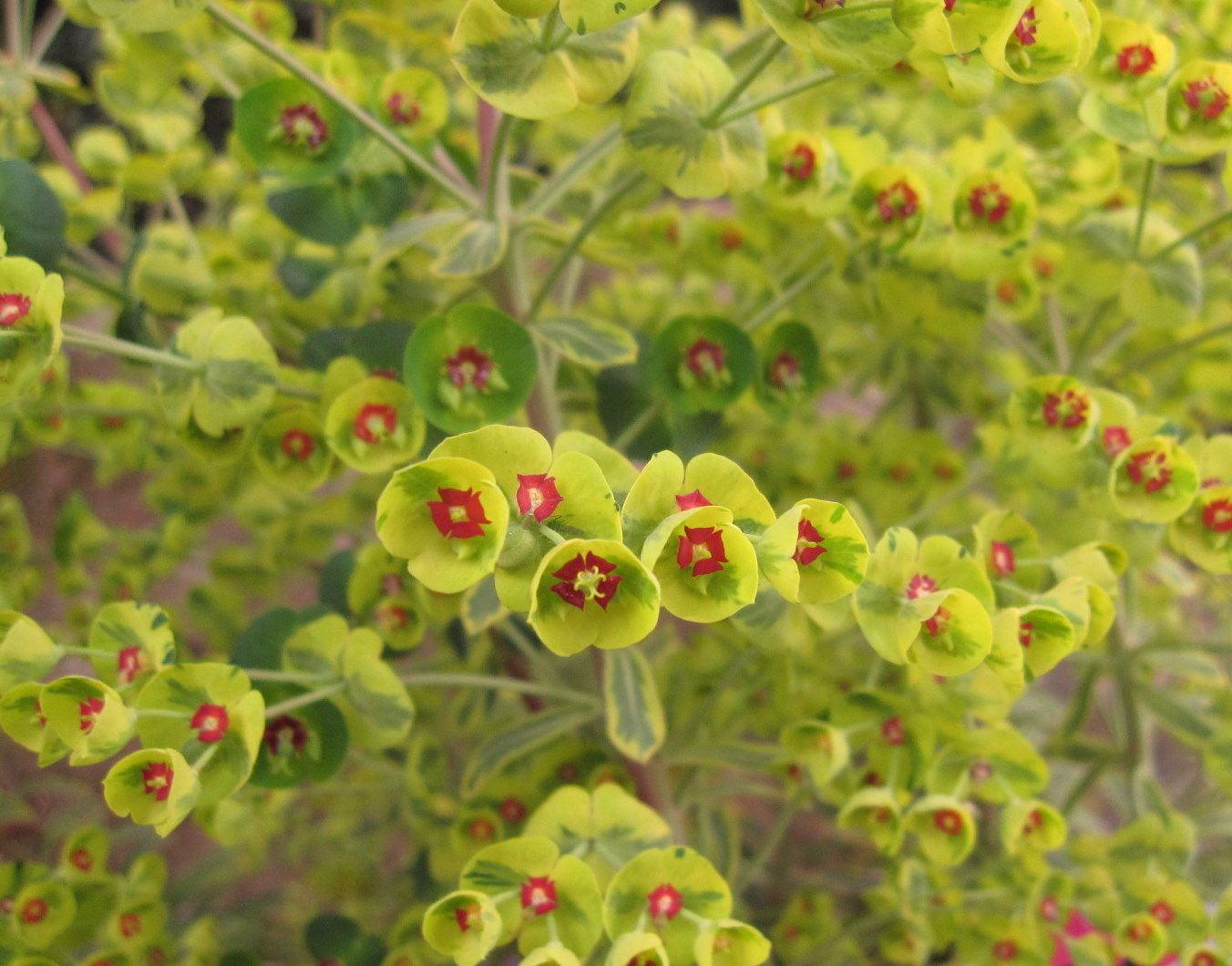 Fresco Of Perennial Zone 7 That Will Adorn Your Beautiful Garden