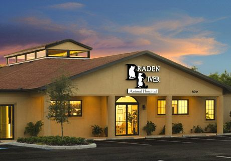 2010 Hospital Design People S Choice Award Entry Braden River Animal Hospital Tienda De Mascotas Decoracion Veterinaria Veterinaria