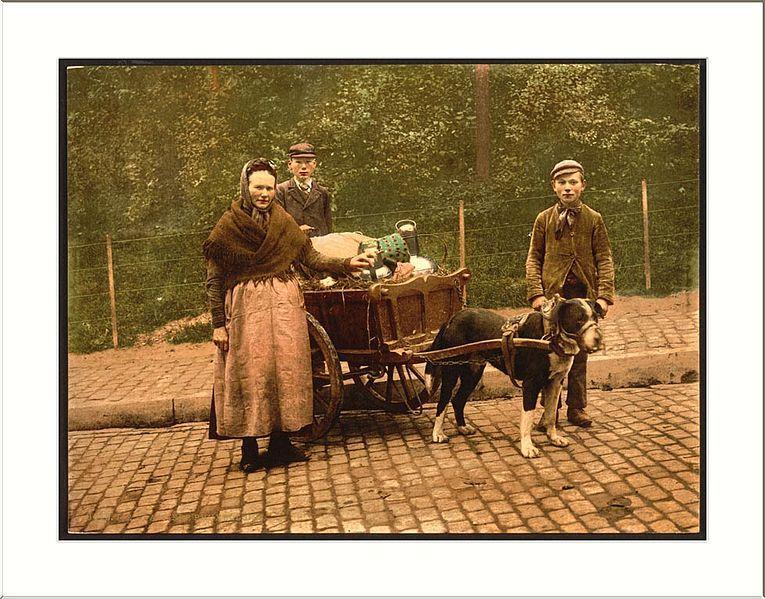 File:Milksellers Brussels Belgium (3).jpg