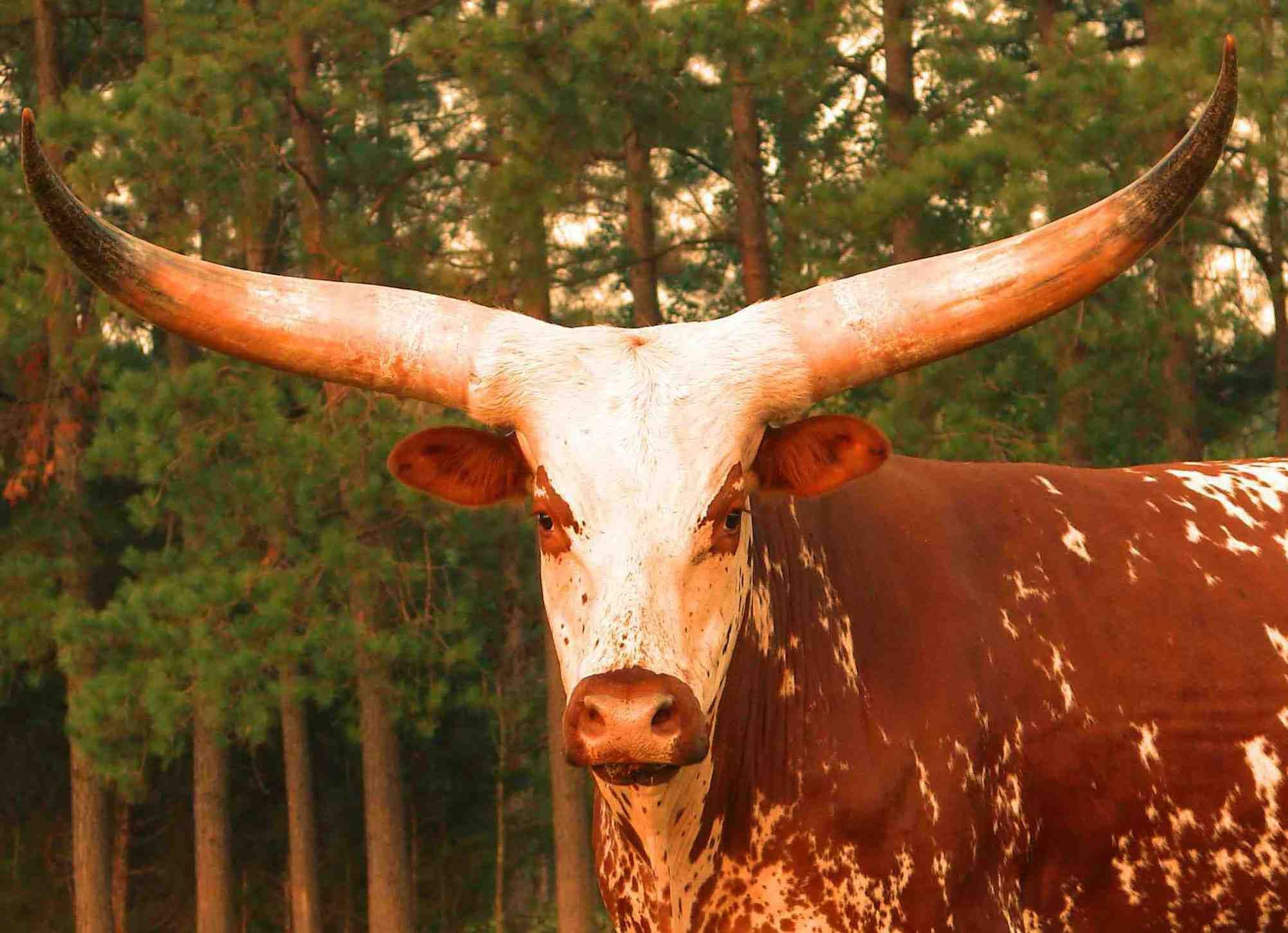 Image detail for -Houston Livestock Show and Rodeo
